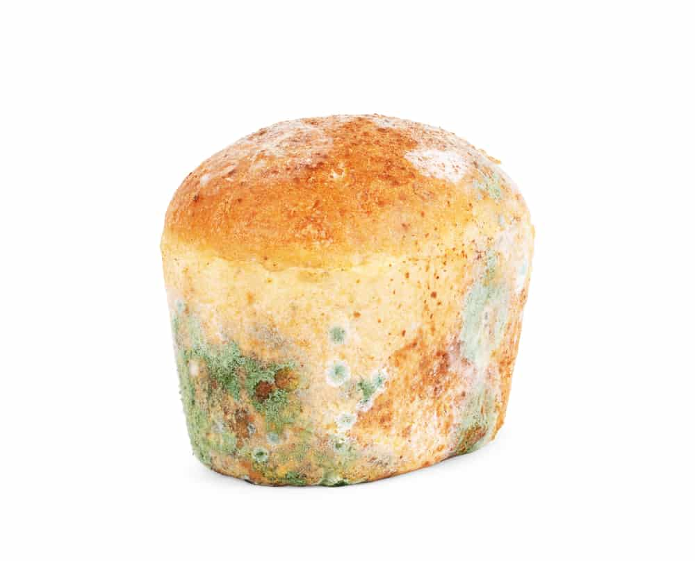 Mold on bread on a white background